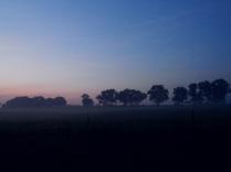 Neighbor's farm field cloaked in early dawn mist