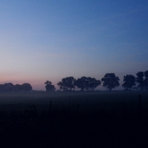 Neighbor's farm field cloaked in early dawn mist
