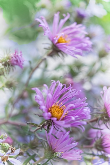 Faster Asters
