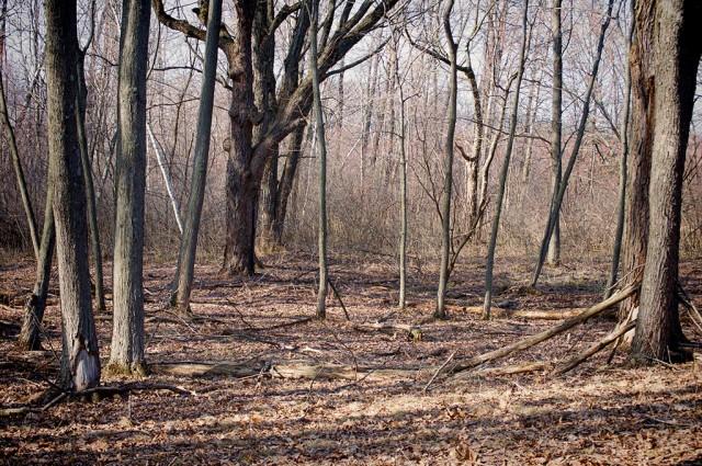 PageCreekHardwoods